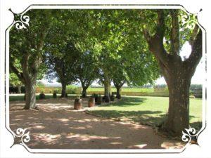 Château Beaumetane - jardin